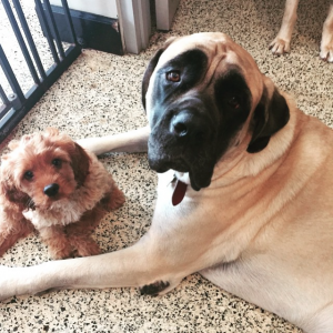 Dog Day Care Miami
