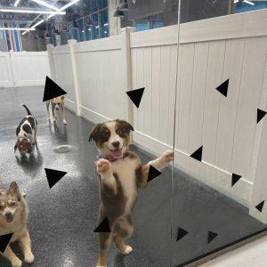 dog in dog daycare