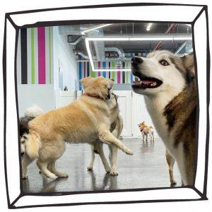 Miami Dog Daycare