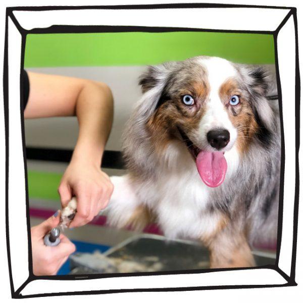 Miami Dog Grooming