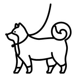 miami dog boarding